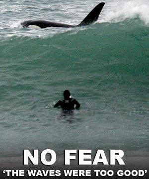 Un surfeur néo-zélandais en tête à tête avec une orque. Photo par NZPA.