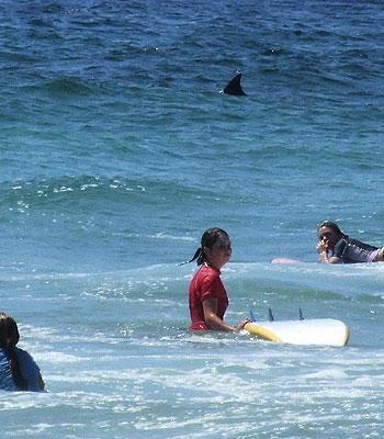 Un moniteur de surf voit un requin…mais continue son cours !