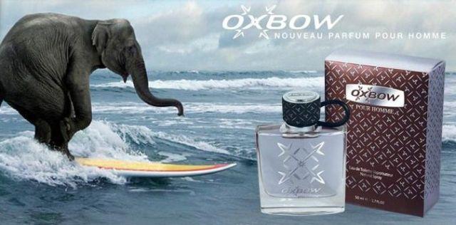 Un éléphant sur un planche de surf pour la pub oxbow pour son parfum pour hommes