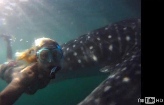 Video GoPro HD : une surfeuse nage avec un requin baleine !