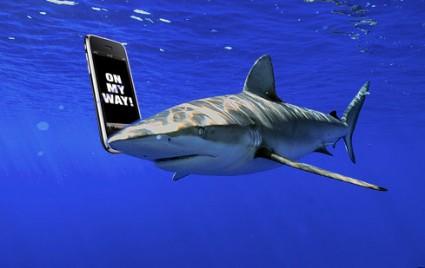 Des SMS pour annoncer les Attaques de Requins…