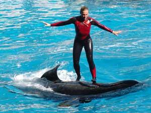Le surf sur orque peut etre dangereux...