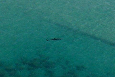 Un requin non identifié se promène sur les spots de Biarritz…