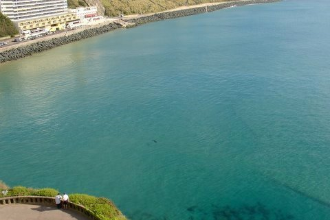 Requin a la Cote des Basques - requin a Biarritz