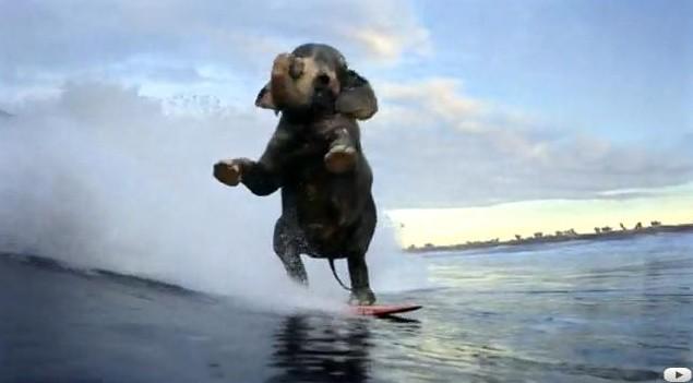 Publicité : l'éléphant surfeur en vidéo !