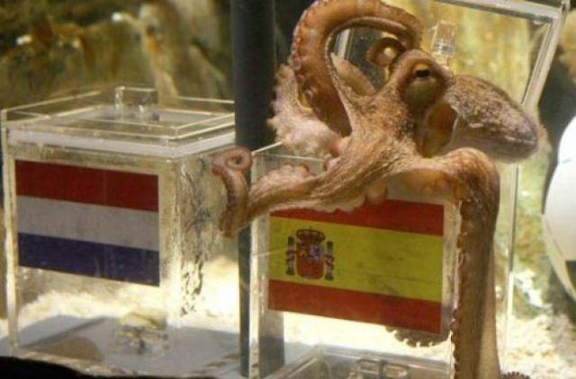 paul le poulpe avait bien vu l'espagne remporter la coupe du monde de football !