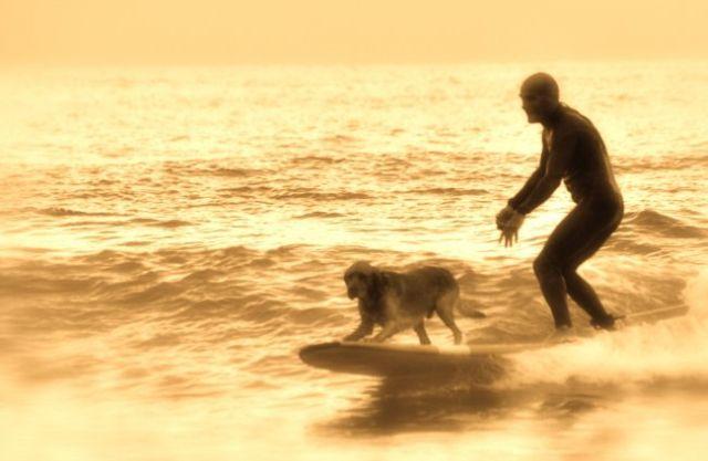 Pol Plantec le prof de surf de l'ecole Hastea surfe avec son chien surfeur Babalou.