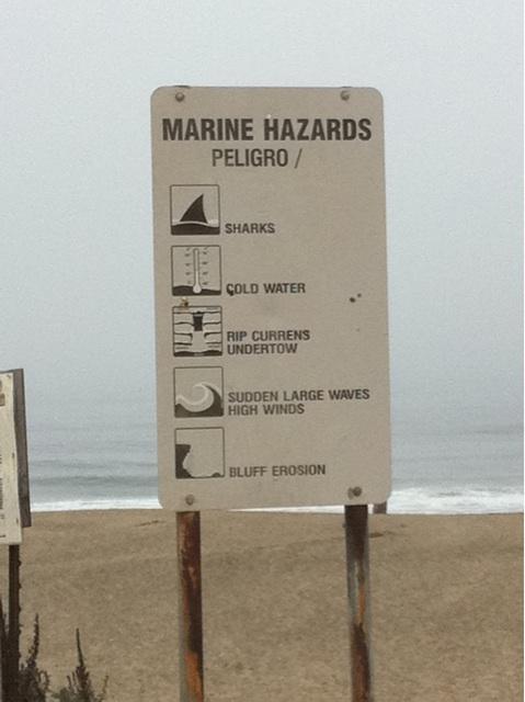 Des conditions hostiles, des requins mais du bon surf à Santa Cruz