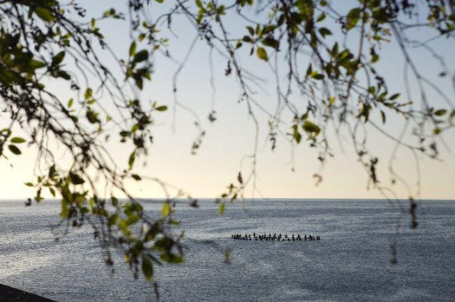 Save The Waves : Malibu entre au Patrimoine Mondial des Vagues