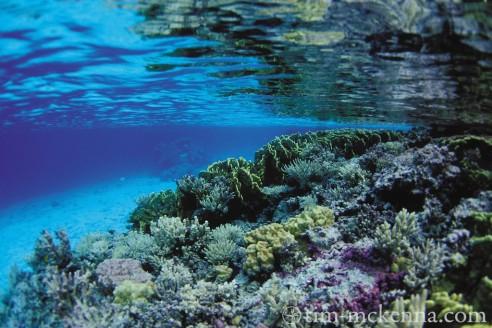 Récifs coralliens : une richesse inestimable des océans en voie de disparition