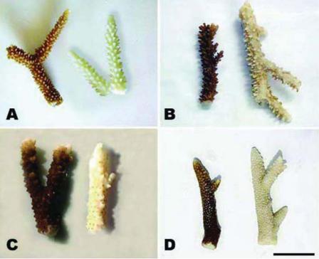 Comment les crèmes solaires provoquent-elles le blanchissement du corail ?