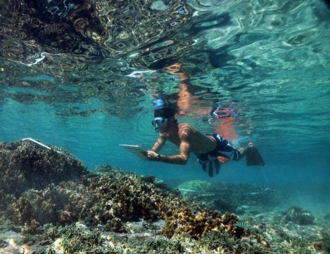 Le surfeur Jeremy Flores participe à Reef Check à la Réunion