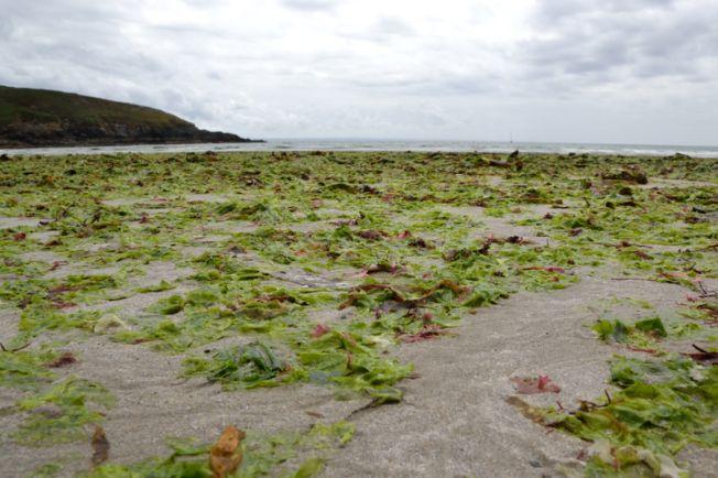 Avec Nicolas Sarkozy, pas d'inquiétudes pour les algues vertes