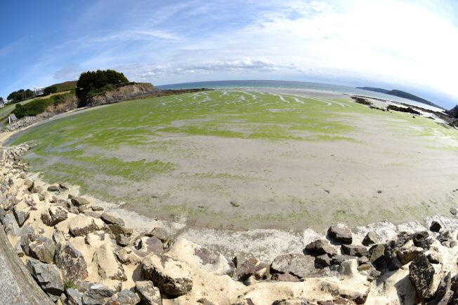 Algues Vertes : les recommandations de protection de l'Anses