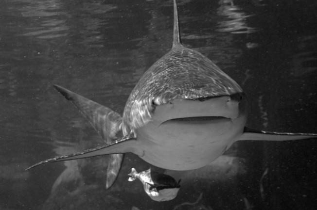 Après les attaques, la pêche aux requins est lancée à La Réunion