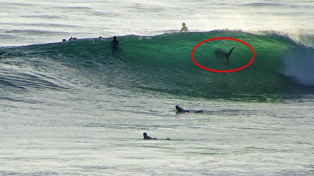 Un grand requin blanc au milieu des surfeurs à Swamis Beach ?