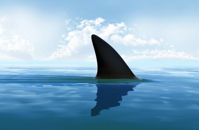 Ailerons de requins toxiques pour la santé : vers la fin du Shark Finning ?