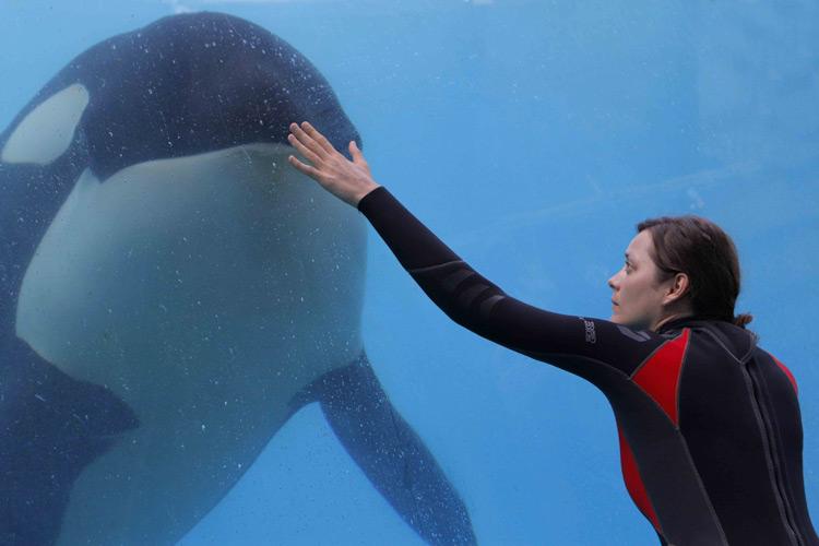De Rouille et d'Os: Marion Cotillard amputée par une orque revit dans la mer