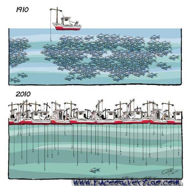 Comprendre la surpêche en images et pourquoi il est urgent de la stopper