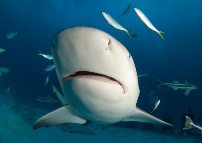 Attaque de Requin à Saint-Leu (La Réunion) : un surfeur grièvement blessé