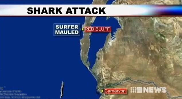 Attaque de Requin en Australie : un surfeur mordu au ventre et au bras