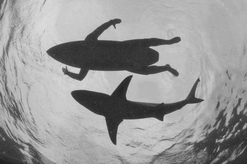 Attaques de Requins : y a-t-il des planches de surf plus à risques ?