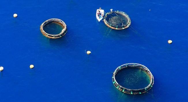 Risque requins à La Réunion: quel sera l'impact de la fermeture de la Ferme Aquacole ?
