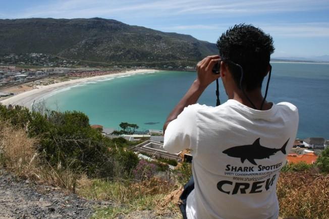 Attaques de Requins: plus de risques à la Nouvelle Lune ?