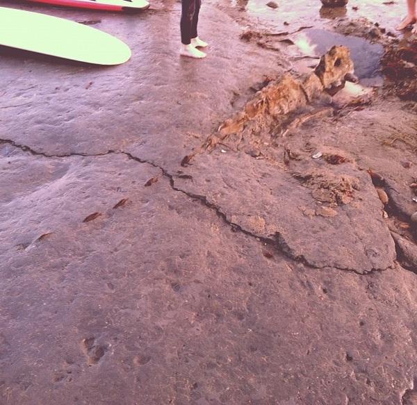 Insolite: il va surfer et tombe sur…un squelette de «dinosaure» !