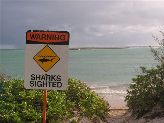 Attaque de Requin: Top 10 des Spots à Risques