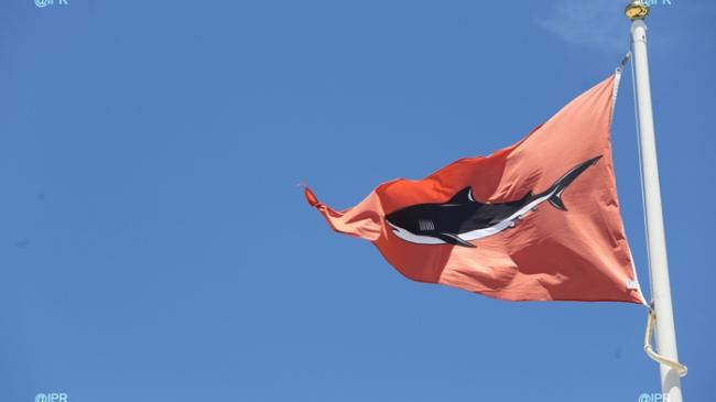 Attaque de Requin à La Réunion: qui est responsable ?