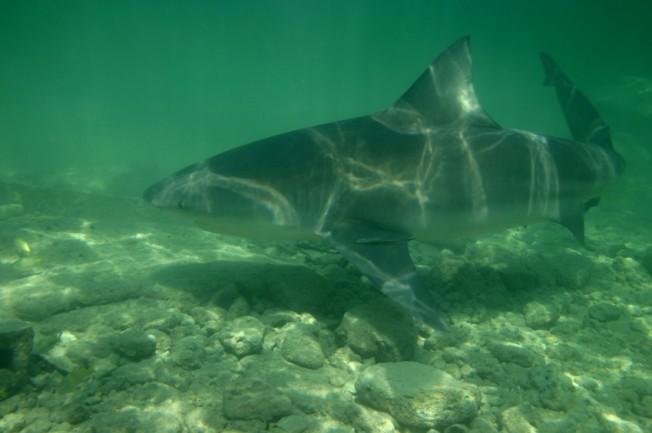 Des Mesures Annoncées pour Réduire le Risque Requin à La Réunion