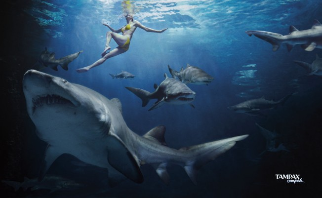Un Tampax protège-t-il d'une Attaque de Requin ?