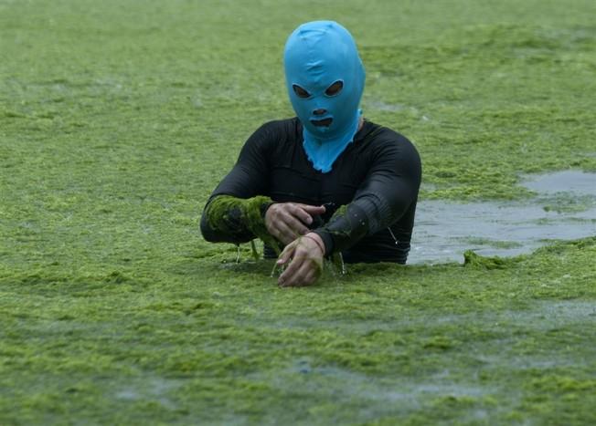 Chine: Marée d'Algues Vertes en Mer Jaune