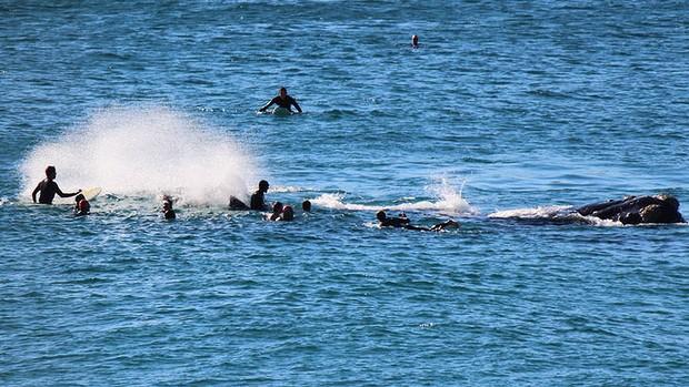 Une Baleine assomme un Surfeur à Bondi