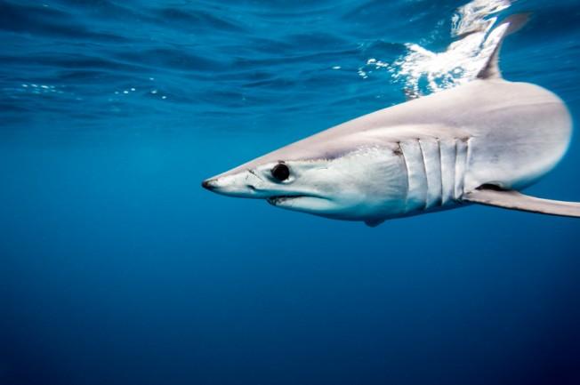 Un Pêcheur blessé par un Requin au large des Landes