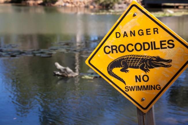 Attaque de Crocodile sur un Surfeur au Costa Rica