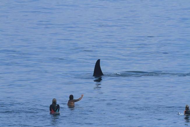 orque uluwatu
