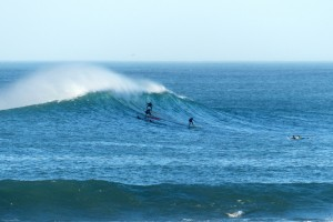 surf parlementia