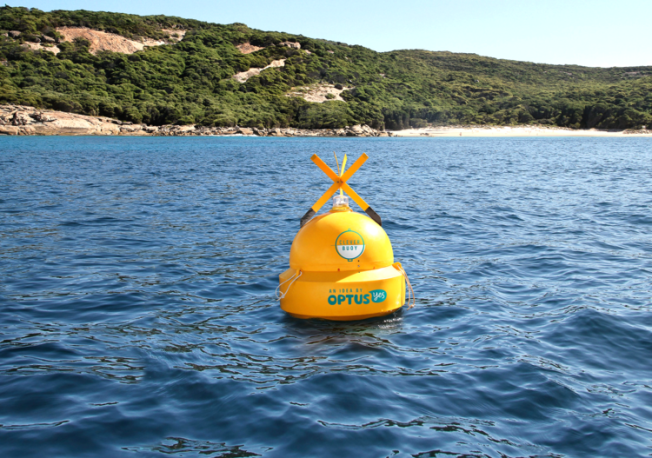 clever buoy shark