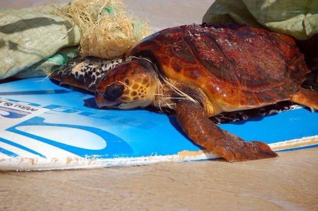 mitu monteiro turtle 4