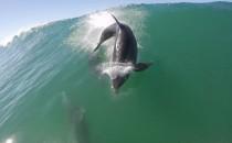 Collision Dauphin contre SUP surfeur