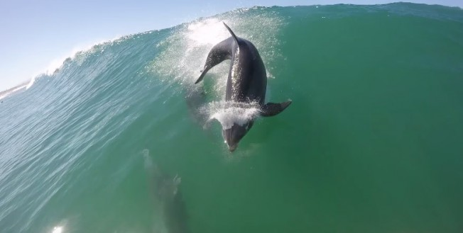 dolphin sup surfer collision