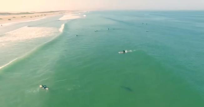 drone requin