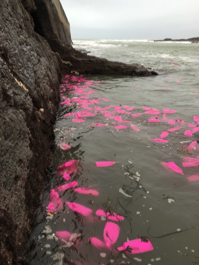 bouteilles plastiques rose a la mer