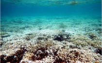 Blanchissement Massif du Récif en Nouvelle-Calédonie