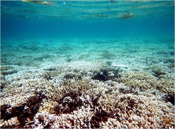 corail blanchissement
