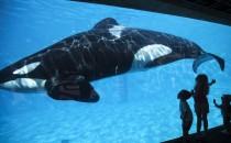 SeaWorld annonce la Fin des Orques en Captivité