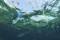 La Mystérieuse Disparition des Plastiques dans l'Océan