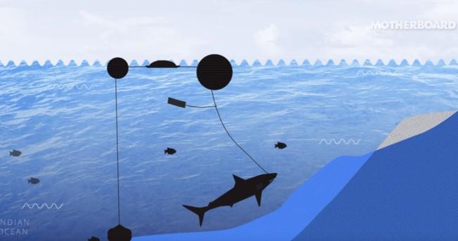 drum line shark